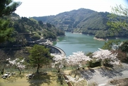 【桜・見ごろ】女神像公園