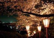 岡山市半田山植物園 桜まつり