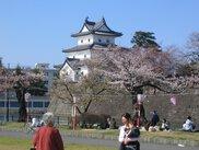 新発田城址公園桜まつり