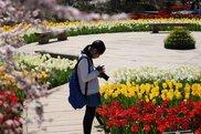 春の花まつり 開園21周年記念感謝祭