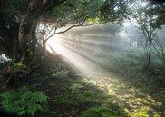 天城写友会写真展「伊豆天城山『幽響の森』」