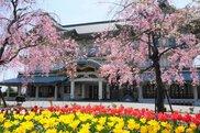 びわ湖大津館 桜&チューリップまつり