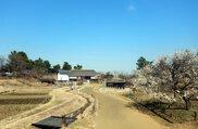 国営昭和記念公園 こもれびの里 里の春まつり