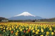 花の都公園 春の息吹