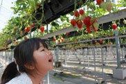 農業生産法人ジャパン・ベリー