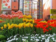 チューリップ四季彩館常設展「百花繚乱~春~」