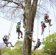 木登り体験「ツリーイング」