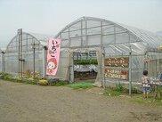 やっと見つけた!とっておきのイチゴ畑?