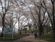 三八城公園