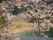七川ダム湖畔
