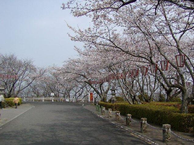 西部公園の桜