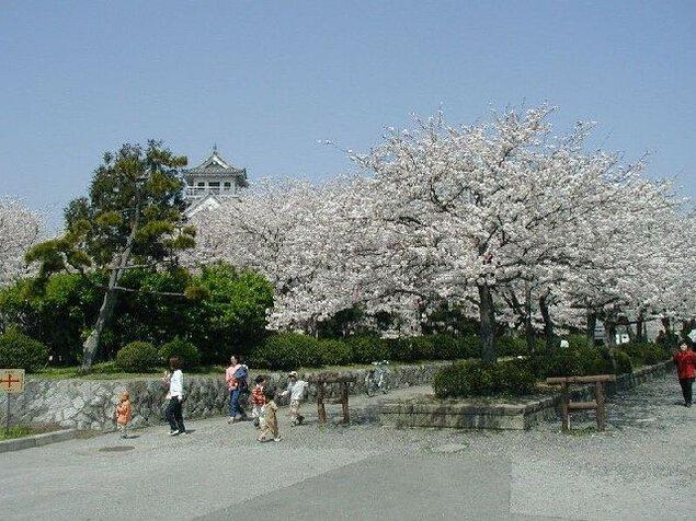 豊公園(長浜城)の桜
