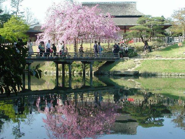 岡山後楽園の桜