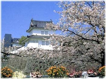 大分城址公園の桜