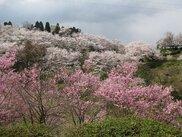 城ケ山公園