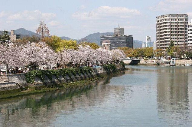 平和記念公園の桜