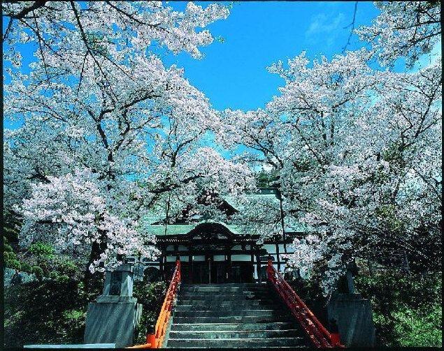 遠野福泉寺の桜