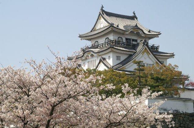 岸和田城周辺の桜