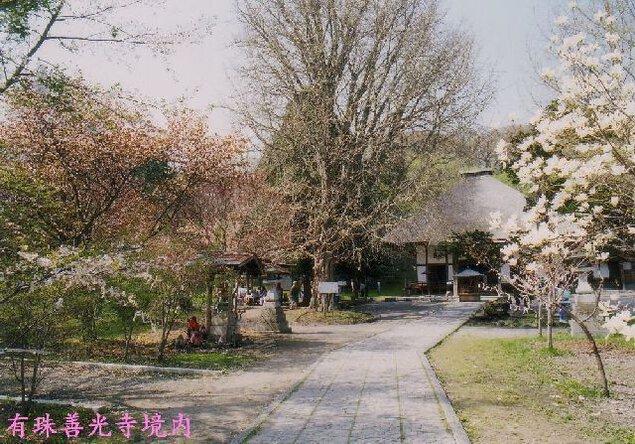 有珠善光寺自然公園の桜