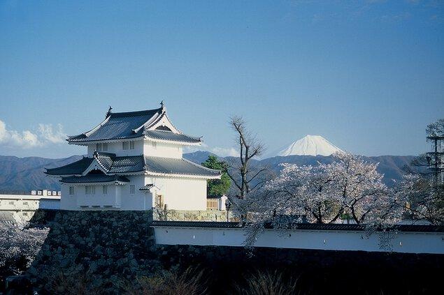 舞鶴城公園の桜
