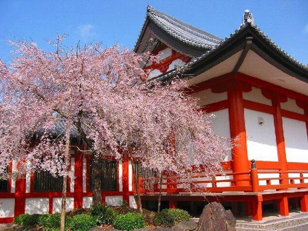 道成寺の桜