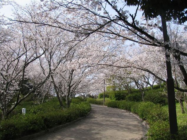 「蛇ヶ谷公園 桜」の画像検索結果