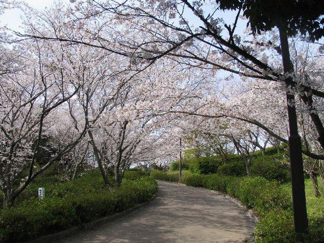蛇ヶ谷公園の桜