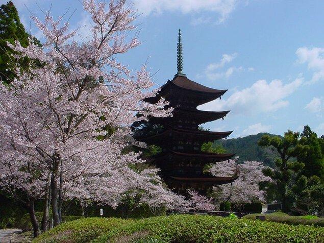 香山公園の桜