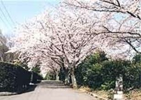 上野ヶ丘墓地公園
