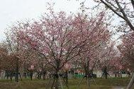 造幣局広島支局 花のまわりみち