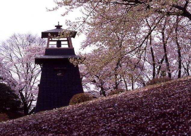 沼田公園(沼田城址)の桜