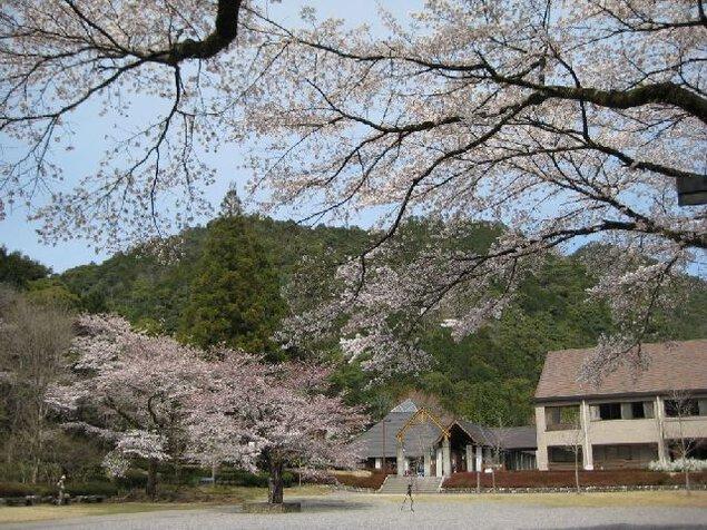 愛知県民の森の桜