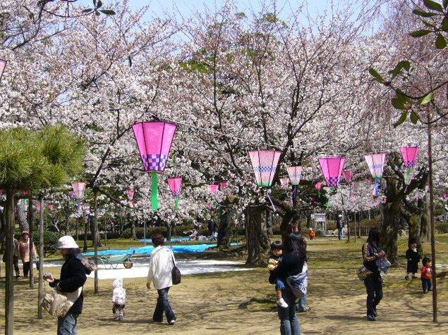 芦城公園の桜