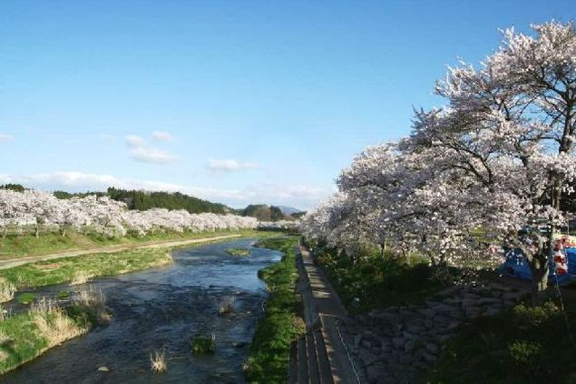 夏井千本桜の桜