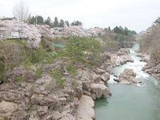 厳美渓の桜