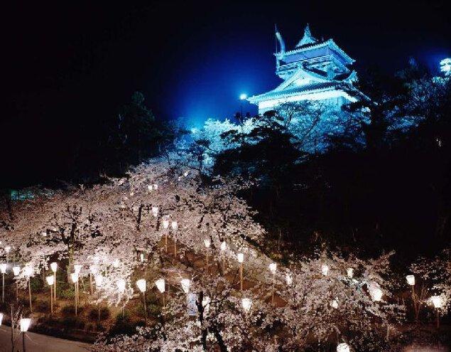 丸岡城(霞ヶ城公園)の桜