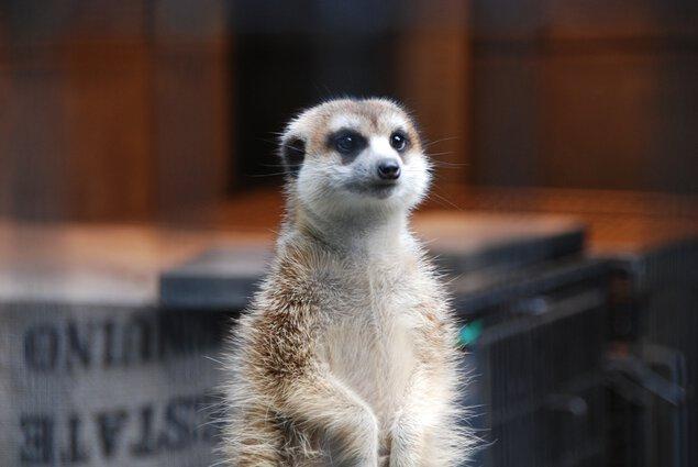 川崎市夢見ヶ崎動物公園