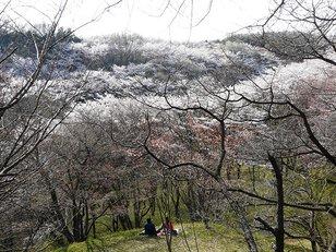 滝山城跡(都立滝山公園)