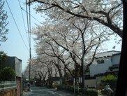 桜土手公園