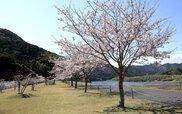 四万十川桜づつみ公園