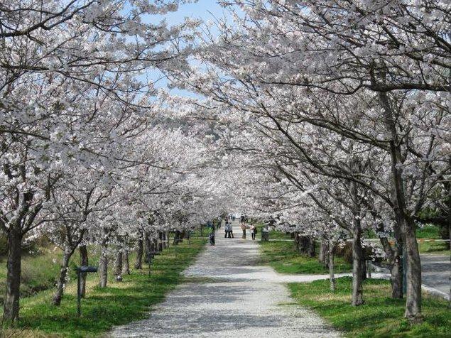 高知県立鏡野公園