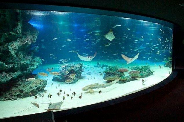 【臨時休館】サンシャイン水族館