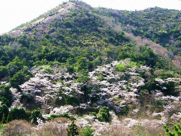 鹿島・扇平自然公園