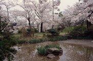 一本松公園