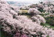 城ヶ山公園