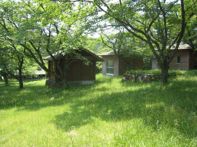 伏木公園キャンプ場