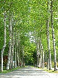 厚沢部町土橋自然観察教育林・レクの森キャンプ場