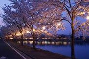 鷹巣中央公園