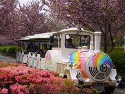 天平の丘公園 花広場
