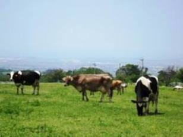 くろべ牧場まきばの風